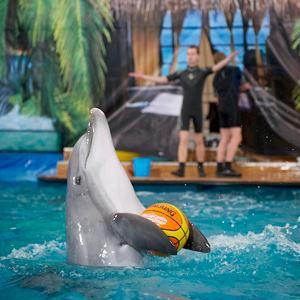 Дельфинарии, океанариумы Хохольского