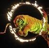 Цирки в Хохольском
