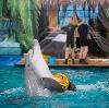 Дельфинарии, океанариумы в Хохольском